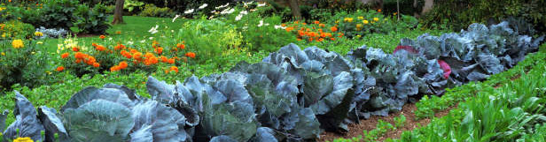 Keep Rabbits out of my Vegetable Garden Homemade Rabbit Repellents