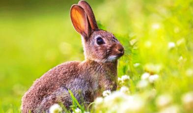 Best Rabbit Deterrent Archives